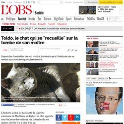 """Toldo, le chat qui se """"recueille"""" sur la tombe de son maître"""