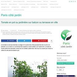 Tomate en pot ou jardinière sur balcon ou terrasse en ville