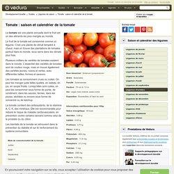 Tomate : saison et calendrier de la tomate
