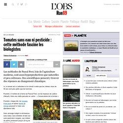Tomates sans eau ni pesticide: cette méthode fascine les biologistes