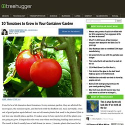 10 Tomatoes to Grow in Your Container Garden