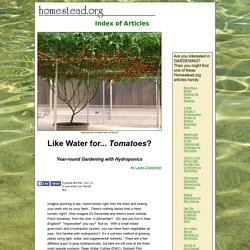 """""""Like Water for... Tomatoes?"""" by Laurie Charpentier page one"""