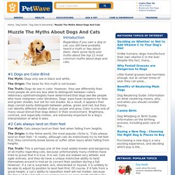 Top 11 Myths About Dog's and Cats