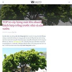 TOP 50 cây bóng mát lớn nhanh thích hợp trồng trước nhà và sân vườn – KHBVPTR
