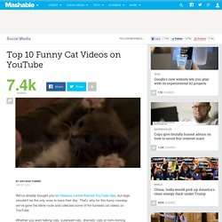 Top 10 Funny Cat Videos on YouTube