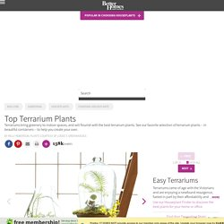 Top Plants for Terrariums