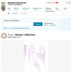 Topic: Botany collection