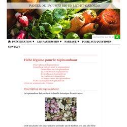 Légume bio - Le topinambour - Conseils pour le semis, la culture et la récolte - Recettes - Paniers bio sur Agen, Villeneuve-sur-Lot en Lot-et-Garonne
