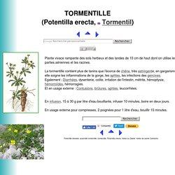 TORMENTILLE