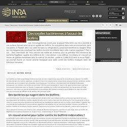 INRA 22/01/13 Des torpilles bactériennes à l'assaut des biofilms