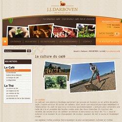 La culture du café - J.J. DARBOVEN Torréfacteur Café, Distributeur Café, Thé et Chocolat