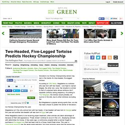 Two-Headed, Five-Legged Tortoise Predicts Hockey Championship