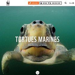 Les tortues marines, des animaux menacés