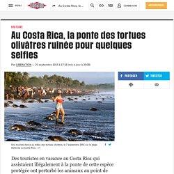 Au Costa Rica, la ponte des tortues olivâtres ruinée pour quelques selfies