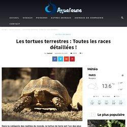 Les tortues terrestres : Toutes les races détaillées !
