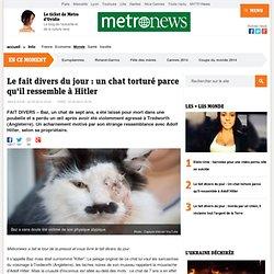 Le fait divers du jour - Un chat torturé parce qu'il ressemble à Adolf Hitler