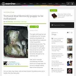 Tortured deaf Kentucky puppy to be euthanized - National American Pit Bull
