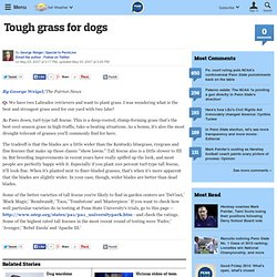 Tough grass for dogs