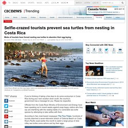 Selfie-crazed tourists prevent sea turtles from nesting in Costa Rica - Trending