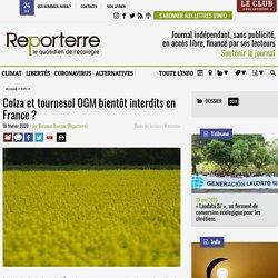 REPORTERRE 18/02/20 Colza et tournesol OGM bientôt interdits en France ?