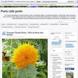 Tournesol 'Double Shine', 100% de fleurs bien doubles
