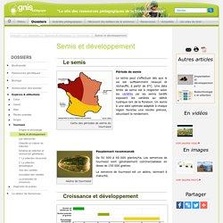 Tournesol : Semis et développement