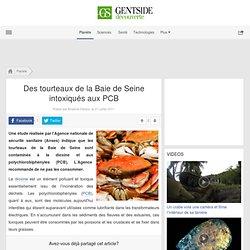 Des tourteaux de la Baie de Seine intoxiqués aux PCB