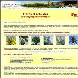 Tous les arbres et arbustes de France