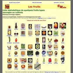 Tous les fruits sauvages ou cultivés