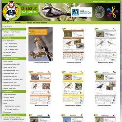 Toutes les fiches espèces - www.oiseauxdesjardins.fr