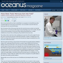 Oceanus : How Does Toxic Mercury Get into Fish?