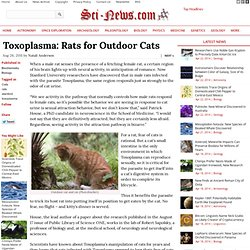 Toxoplasma: Rats for Outdoor Cats