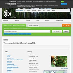 CABI - Invasive species compendium - Toxoptera citricida