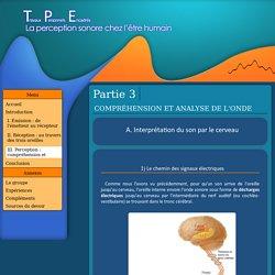 TPE sur le son : interprétation par le cerveau