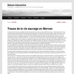Traces de la vie sauvage en Morvan