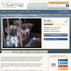 Help Save Dogs From Meat Trade