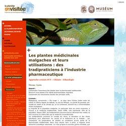 Les plantes médicinales malgaches et leurs utilisations : des tradipraticiens à l'industrie pharmaceutique