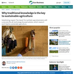 ECO-BUSINESS 11/07/19 Why traditional knowledge is the key to sustainable agriculture