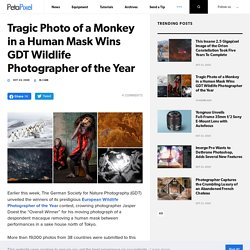 Tragic Photo of a Monkey in a Human Mask Wins GDT Wildlife Photographer of the Year