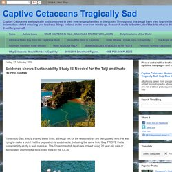 Captive Cetaceans Tragically Sad: Evidence shows Sustainability Study IS Needed for the Taiji and Iwate Hunt Quotas