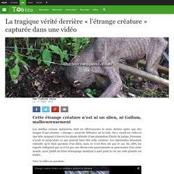 """La tragique vérité derrière """"l'étrange créature"""" capturée dans une vidéo"""