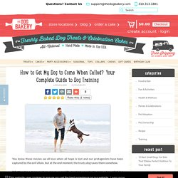 How to Train Your Dog To Come When Called? Dog Training Guide