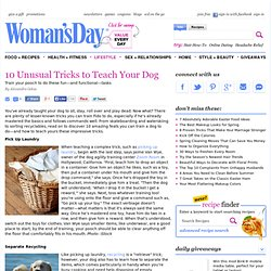 How to Train Your Dog - Cool Dog Tricks at WomansDay