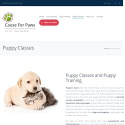 Best Dog Behaviorists and Puppy Trainers - Cause For Paws