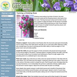 Training a Climbing Rose (National Gardening Association)