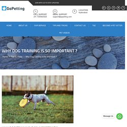 Why Dog Training Is So Important ?