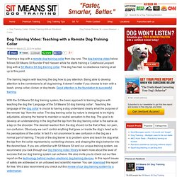 Dog Training Video: Teaching with a Remote Dog Training Collar