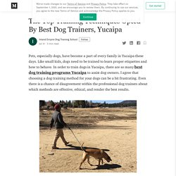 The Top Training Techniques Opted By Best Dog Trainers, Yucaipa