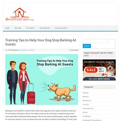 Training Tips to Help Your Dog Stop Barking At Guests