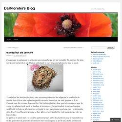 trandafirul de Jericho | Darklorelei's Blog